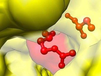 Dùng Enzymes có tốt không?
